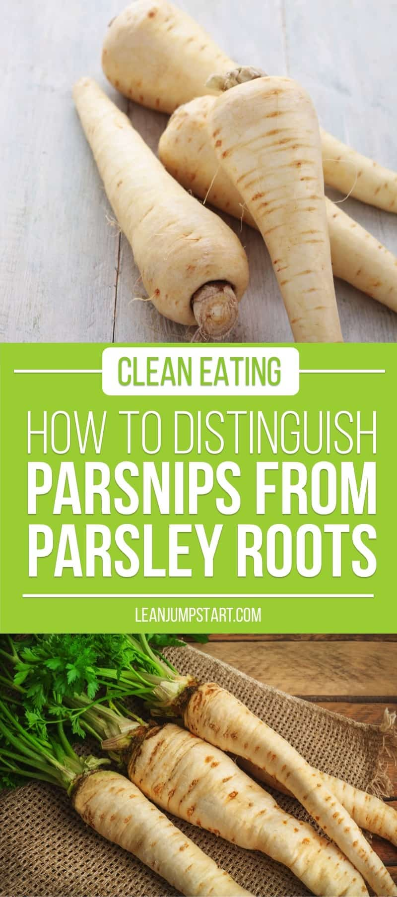 parsnips vs parsley root: an easy trick how to distinguish them